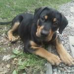 Jackson The Dog